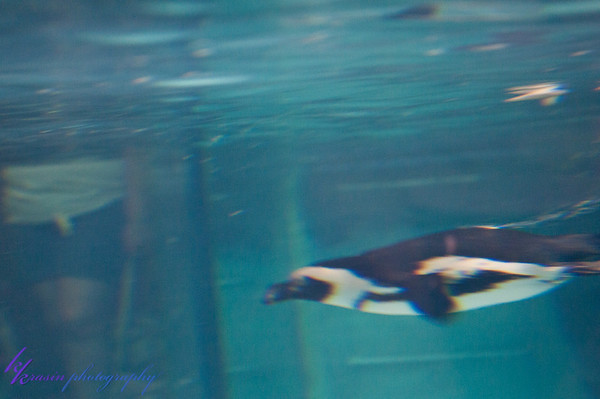 We spent a while watching the penguins swimming