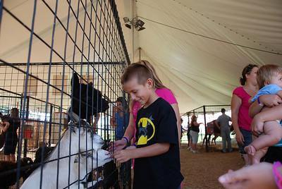 Levi is feeding the goats