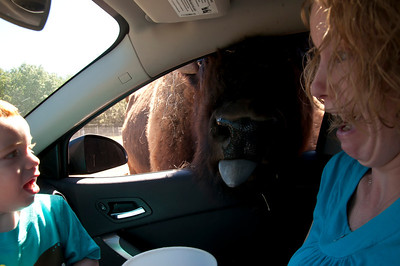 Drive-Thru African Safari