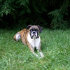2008August24_Lucy_002
