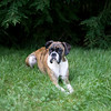 2008August24_Lucy_001