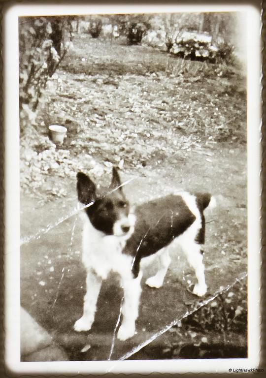"""""""Tiger"""", my dog in Denver, Colorado.  1963"""