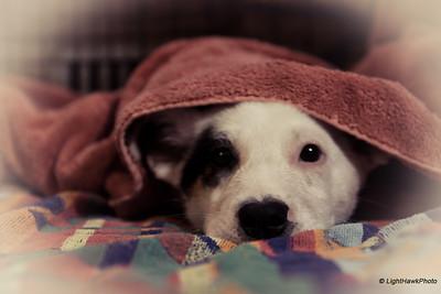 Puppie's first bath