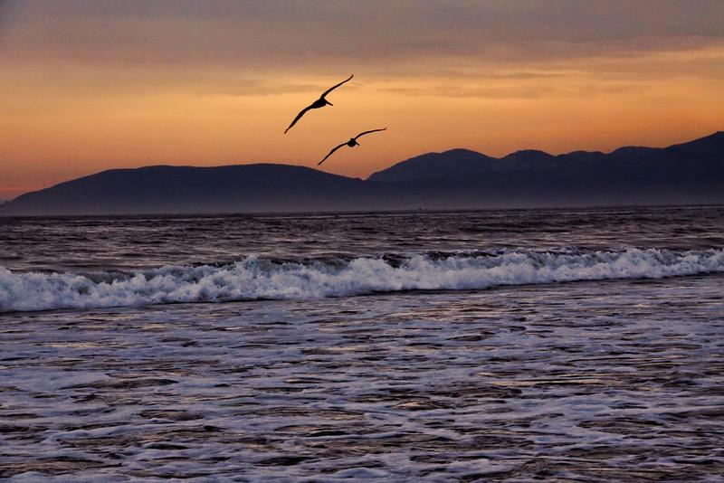 Pelicans flying over Pismo Beach, California
