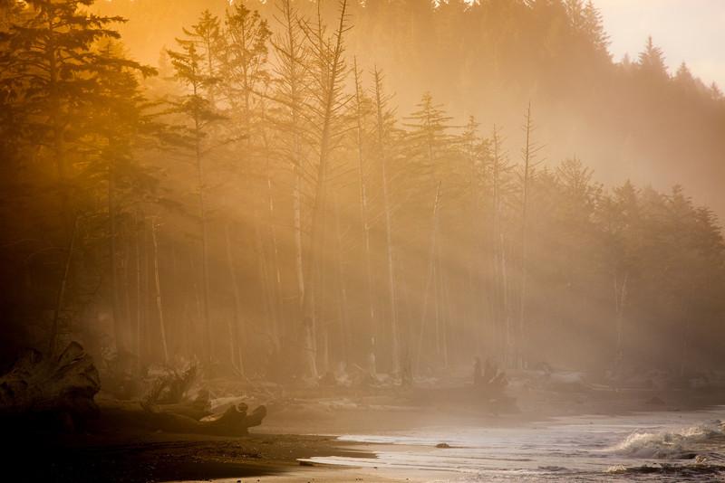 Sunrise through the dawn mist along the Washington coast near La Push