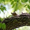 Cute Squirrel <br /> 6/9/2007