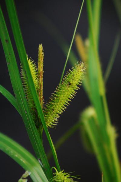 Neat Grass <br /> 5/28/2007