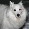 Blizzard Pup