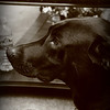 Mia <br /> This is my sister's dog. She's a cool dog!