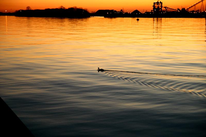 Sunset Cruise...Duckie Style