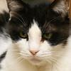 Thomas <br /> Cat