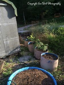 20140624-Garden-02