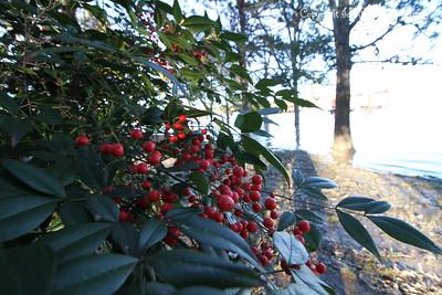 20160101-Berries-04