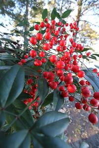 20160101-Berries-03