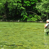 a fly-fisherman reels in a trout after hooking it on a dry fly on a clear mountain river