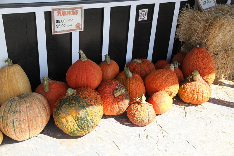 Sept. 30/12 - Pumpkins outside Al Ferri & Sons, 8605 Heritage Road, Brampton