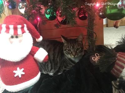 20161219-Christmas2016-05