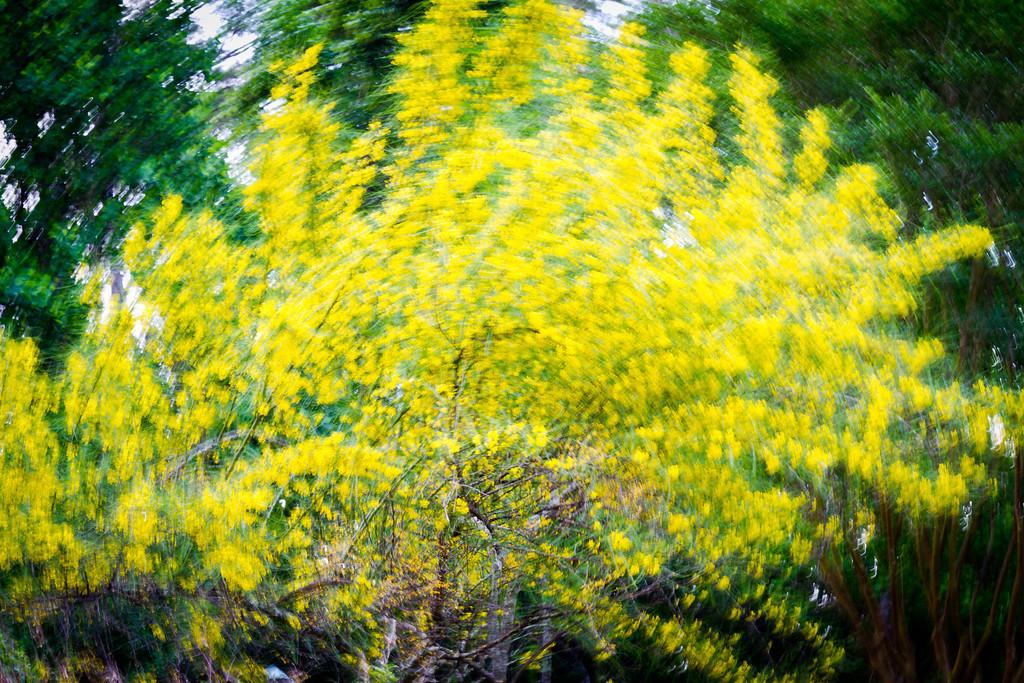 Wind in Trees at Mercer Arboretum
