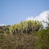 CS7G0031-20120319-Monday to and at Amboseli-0006