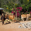 CS7G0071-20120319-Monday to and at Amboseli-0013