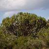 CS7G0042-20120319-Monday to and at Amboseli-0007