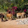 CS7G0068-20120319-Monday to and at Amboseli-0012