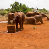 CS7G0017-20120319-Monday to and at Amboseli-0001