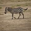 CS7G0098-20120320-Tuesday at Amboseli-0032