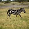 CS7G0078-20120320-Tuesday at Amboseli-0028