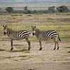 CS7G0088-20120320-Tuesday at Amboseli-0030