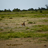 CS7G0106-20120320-Tuesday at Amboseli-0035