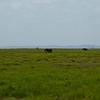 CS7G0028-20120320-Tuesday at Amboseli-0005