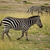 CS7G0081-20120320-Tuesday at Amboseli-0029