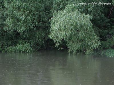 20100616-LakeShawneeAfterTheRain-18