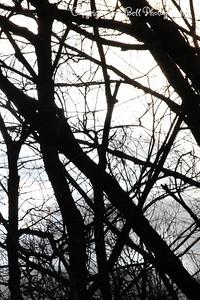 20130216-ReflectionsAtTheFarm-17