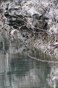 20130216-ReflectionsAtTheFarm-15