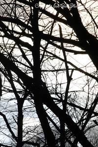 20130216-ReflectionsAtTheFarm-18