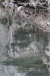 20130216-ReflectionsAtTheFarm-27