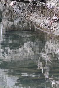 20130216-ReflectionsAtTheFarm-24