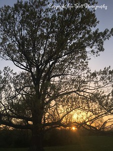 20170415-Sunset-01