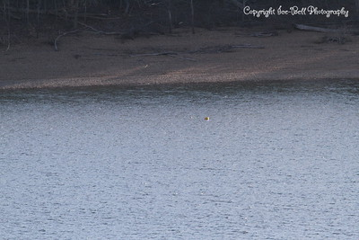20130201-TableRockLake-05