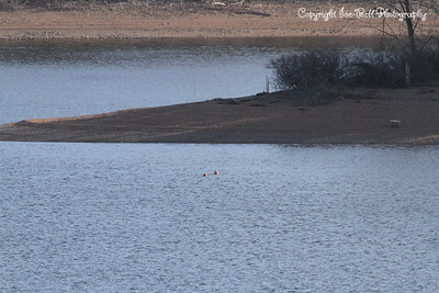 20130201-TableRockLake-08