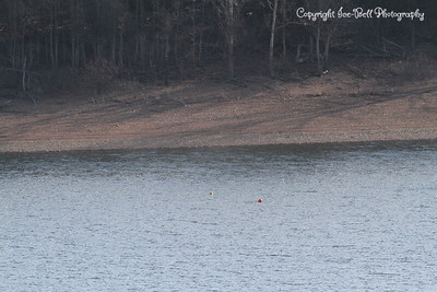 20130201-TableRockLake-06