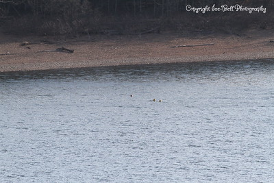 20130201-TableRockLake-07