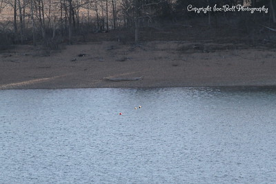 20130201-TableRockLake-02