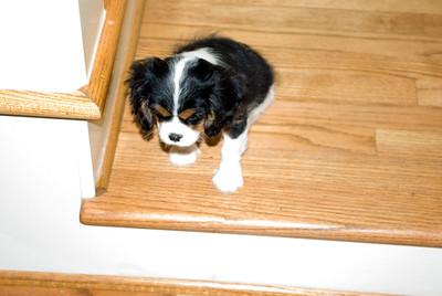 Jessie's New Puppy - Lucy