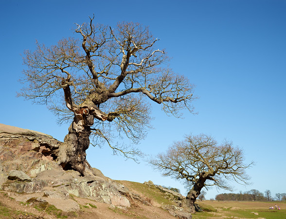Spring is coming - Bradgate Park