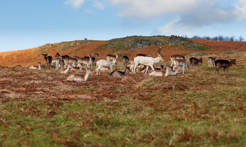 Follow the White Deer