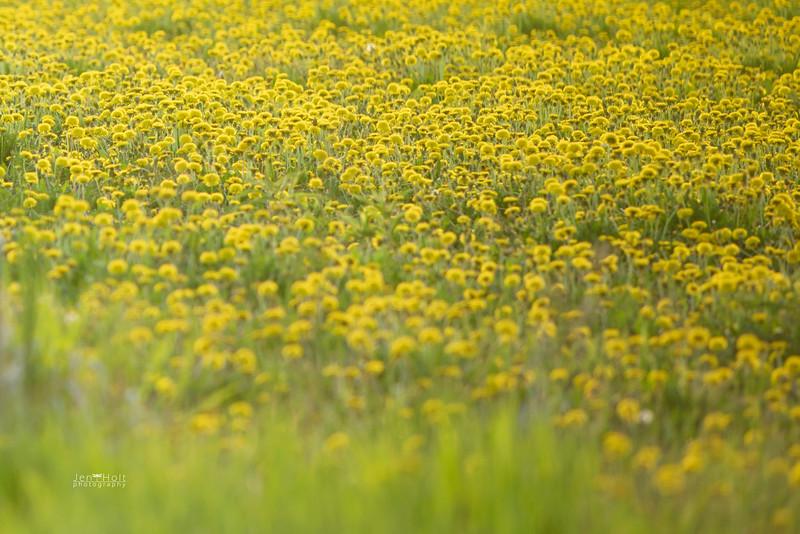 139: Yellow