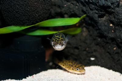 Aquarium-0010